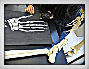Help students learn drawing and anatomy with a disarticulated skeleton